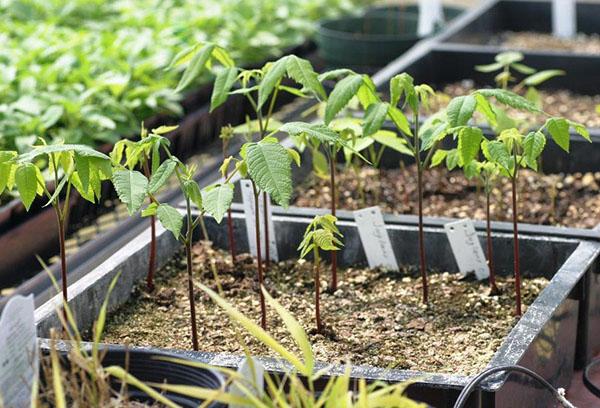 как посадить семена в вальхейм