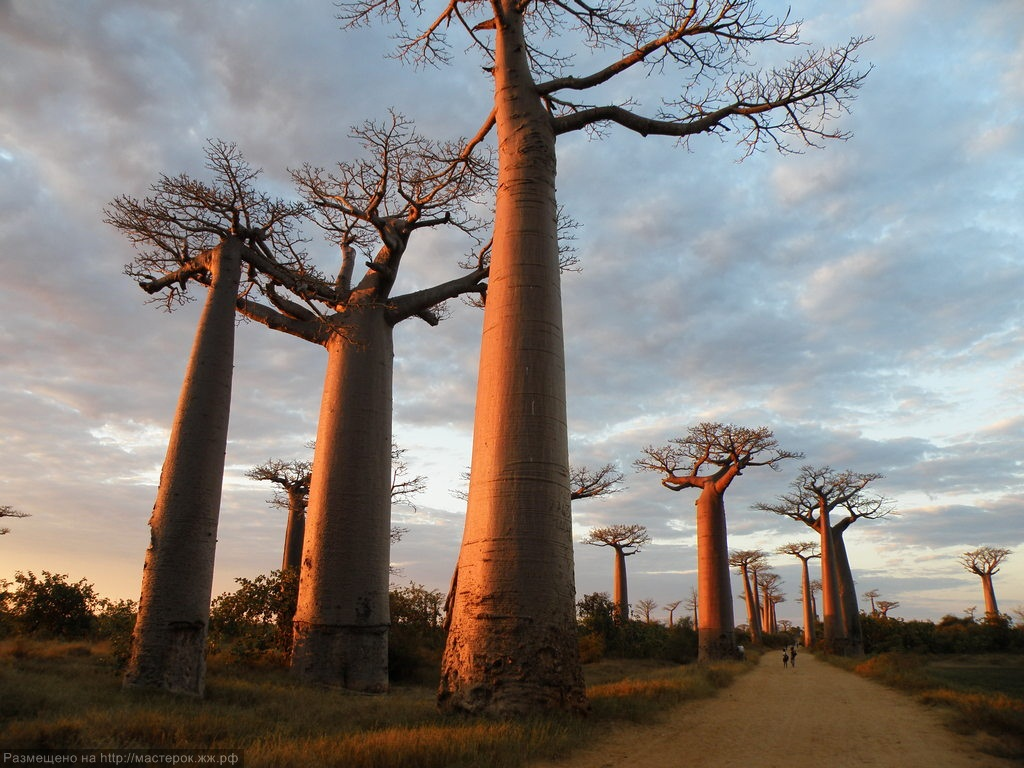 Baobab and Wildebeests