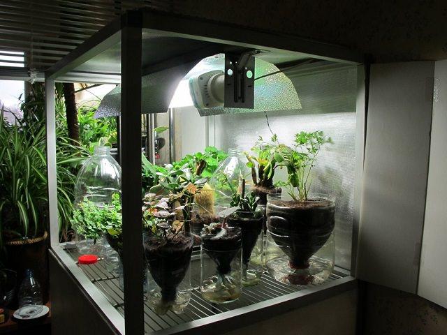 Короб для выращивания марихуаны как скрыть в анализах марихуану