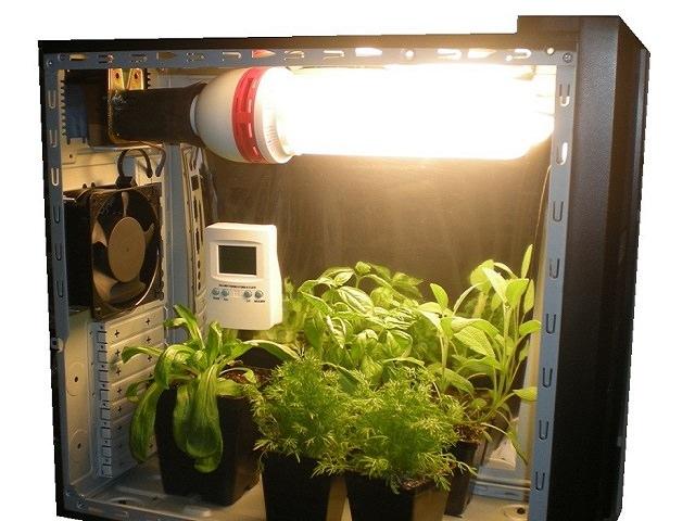 Ящик для выращивание конопли как сделать водный из конопли