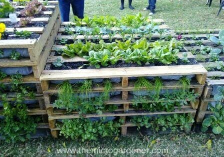Pallet vertical gardens can be stacked and staggered at different heights depending on your space.