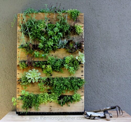 Pallet garden planted out with succulents.