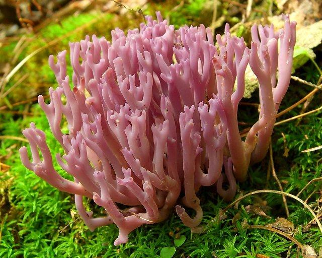 10 самых необычных грибов